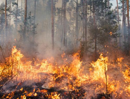 Hinweise der Homburger Feuerwehr Bei Wald- und Wiesenbränden bitte genaue Hinweise geben