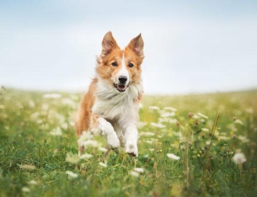 Müssen Hunde angeleint werden?  Polizeiverordnung gibt Hinweise zur richtigen Haltung