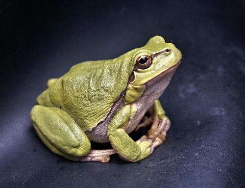 Ehrenamtliche Amphibienhelfer gesucht – Infotreffen am 6. Februar